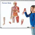 G-094: Human Body Magnets