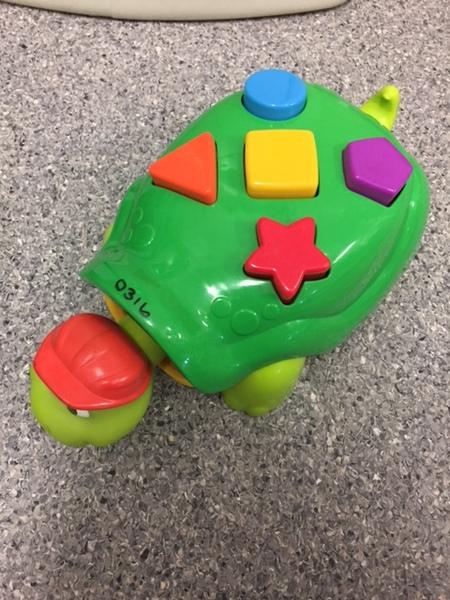 0316: Green Turtle