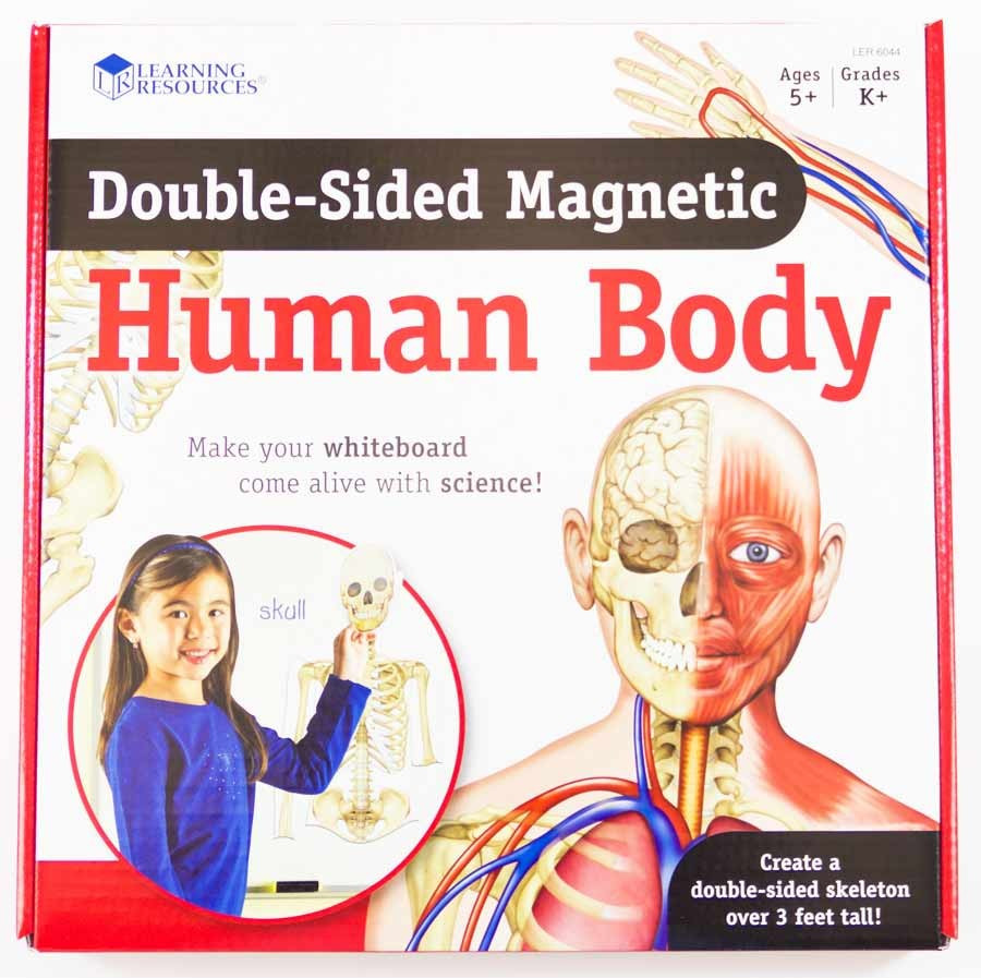 0989: Learning Resources Double-sided Magnetic Human Body