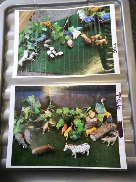 T56: ZOO ANIMALS