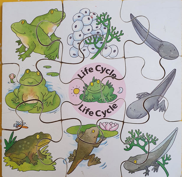 D0013: FROGS LIFE CYCLE