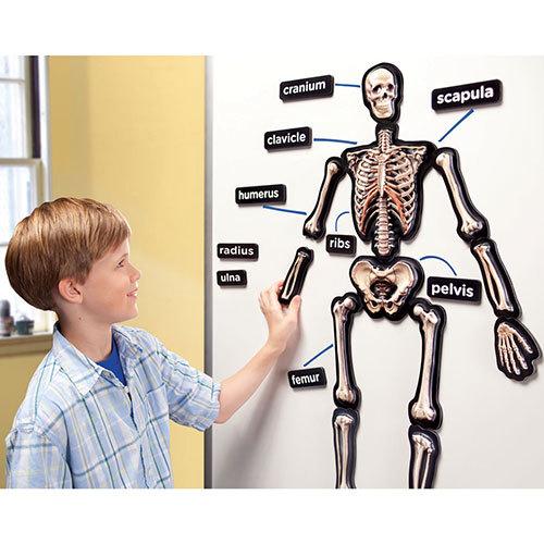 D096: 3D Magnetic Skeleton