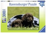 P675: 300 piece Puzzle - Labrador Puppies