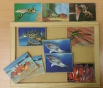 C4.583.1: INSECT AND SEA MEMORY GAME