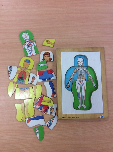C2.646.1: HUMAN BODY LAYER PUZZLE