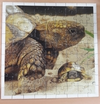 C2.762.3: WILD ANIMAL BABIES-TURTLE