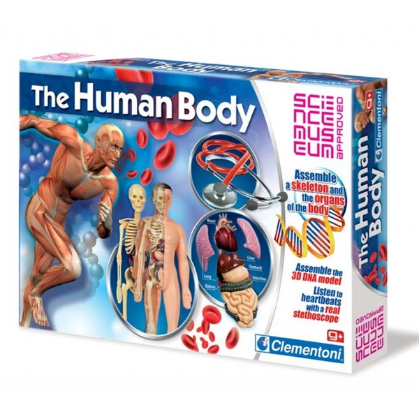 D4.062.1: THE HUMAN BODY