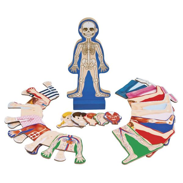 D4.861.4: Human Body Magnetic Dress-up