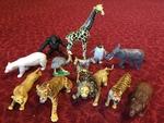 C504: Zoo Animals