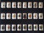 122: Mini Beasts - Beetles & Bugs