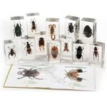 G212: Collection of 11 Insects