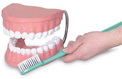 E3131: Giant Teeth & Toothbrush Set 2