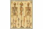 2390: Skeletal System Vintage Puzzle