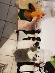 3068: Puppet Pets #2