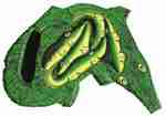 600: Puzzle: Crocodiles