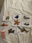 3108: Sea Creatures with Flash cards 2