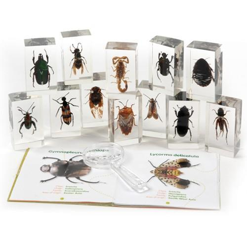 789: Collection of Insects in Resin