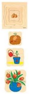 2307: Educo  Sequence Tulip Puzzle