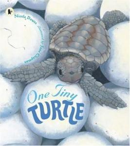 CBGSS100097: One Tiny Turtle