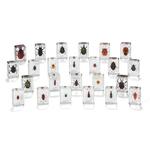 E201: Mini Beasts Large Beetles & Bugs Set